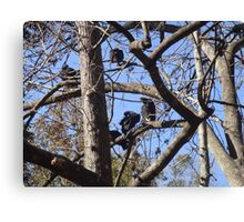 Black Vultures in tree Canvas Print