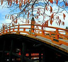 Autumn colours by Tamara Travers
