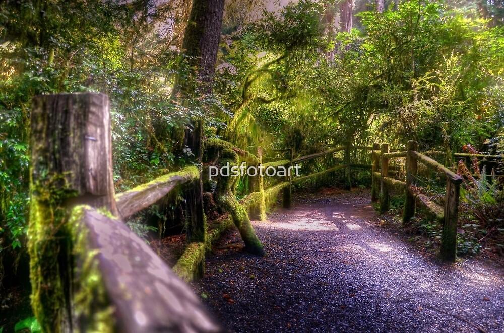 follow the path by pdsfotoart