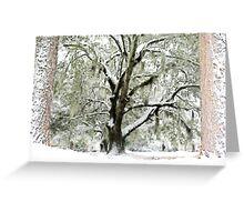 Majestic Oak Greeting Card