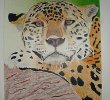 Leopard by Chris Locklear