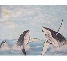 Houp Back whales Photographic Print
