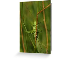 Giant Bush Cricket Greeting Card