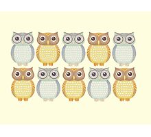 Owl Collection Photographic Print