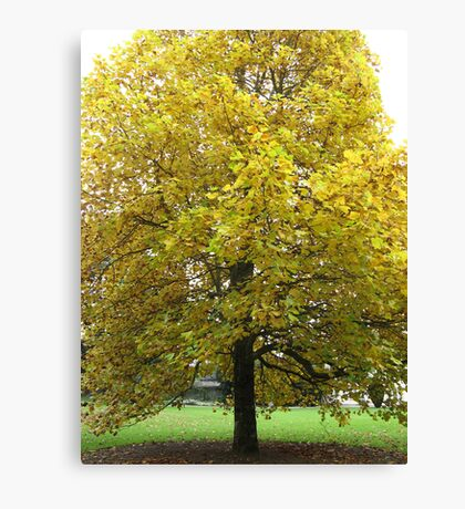 Golden Tree in a Box Canvas Print