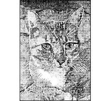 Doodled Cat Photographic Print