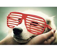 shutter dog Photographic Print