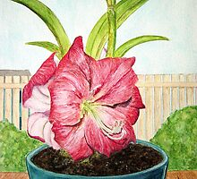 A New Amaryllis by Heather D. Oliver