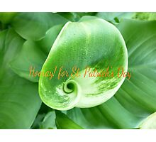 Green Lily for St. Patrick's Day Photographic Print