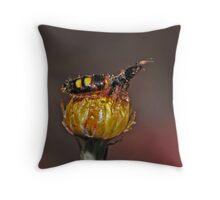 flightless female wasp Throw Pillow