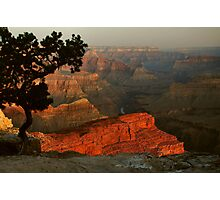 Early Morning, Grand Canyon Photographic Print