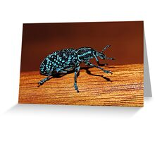 Chrysolopus spectabilis (Botany Bay Weevil) Greeting Card