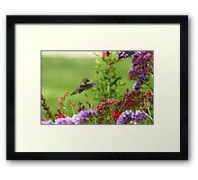 Humming Above the Color Framed Print