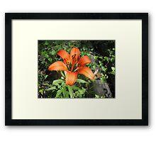 Wood Lily Framed Print