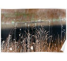 Winter Grass Poster