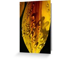 Yellow Flower with Water droplets  Greeting Card