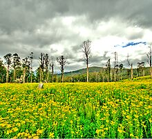 Natures Reclamation - Marysville , Yarra Ranges  - The HDR Experience by Philip Johnson