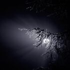night fog by Bill vander Sluys