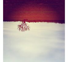 One Red Tree Photographic Print