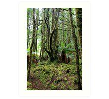 Creepy Crawley Forest - South West Tasmania Art Print