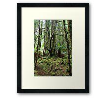 Creepy Crawley Forest - South West Tasmania Framed Print