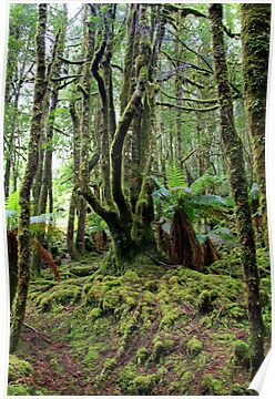 Creepy Crawley Forest - South West Tasmania by Ruth Durose