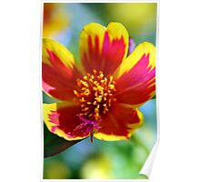 Red Fire Flower Poster