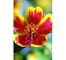 Red Fire Flower Photographic Print