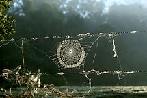Spider's Web on Fence by Steve Malcomson