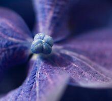 Ultra Violet by Jenni77