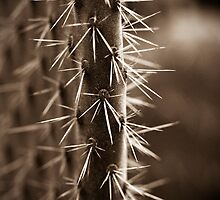 Prickles by Amy Skinder