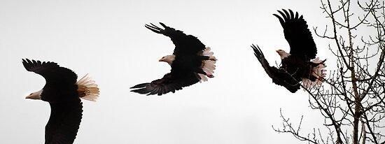 Aguila Americana  by Dan Jesperson