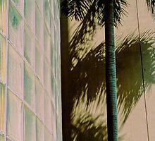 PalmGlass by BMGImage