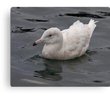 Glaucous Gull Canvas Print