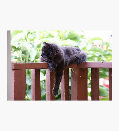 Kitty on deck Photographic Print