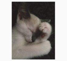 Napping Kitten Mocha by silverdragon