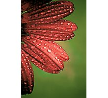Red Flower with Waterdroplets Photographic Print