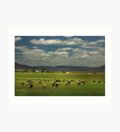 Killarney Dairy Cattle © Vicki Ferrari Photography Art Print