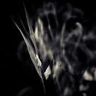 #013 by Paul Desmond