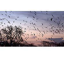 Obama Bird Photographic Print