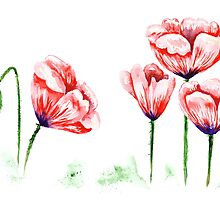 Watercolor poppies illustration by kisikoida