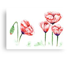 Watercolor poppies illustration Canvas Print