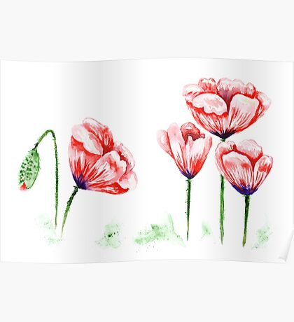Watercolor poppies illustration Poster