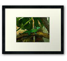 A green Lizzard Framed Print