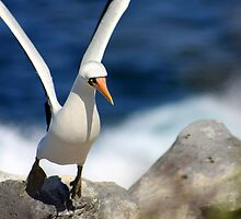 Ready for Takeoff by Sue  Cullumber
