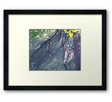 Nature's Artist Framed Print