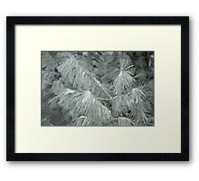 Frosty Transformation - With Sugar on Top Framed Print