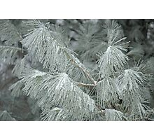 Frosty Transformation - With Sugar on Top Photographic Print