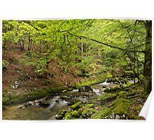 Valserine river in Haut Jura Natural Park Poster