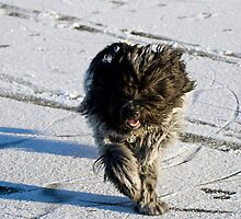 Running furball by Anemone